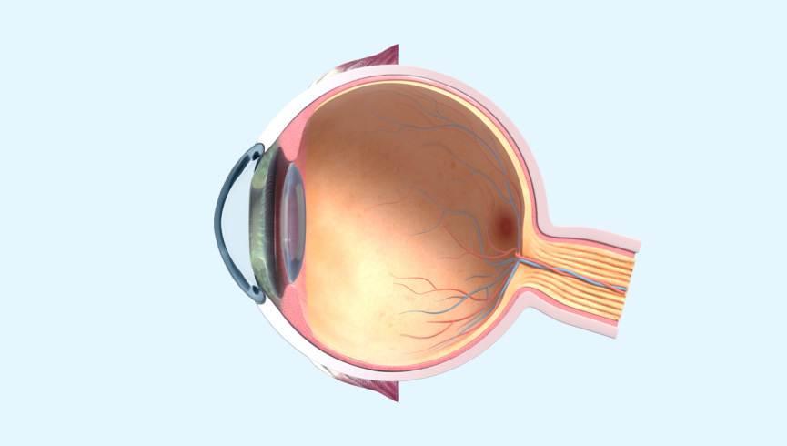 Virtual Eye Model Johnson Johnson Vision