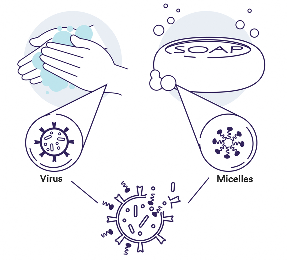 Figure 2: How soap kills the SARS-CoV-2 virus